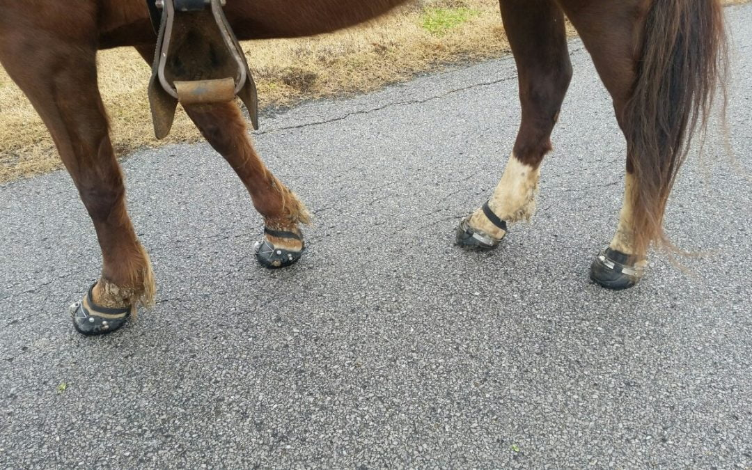 Hoof care and protection – more Easyboots – Part 2