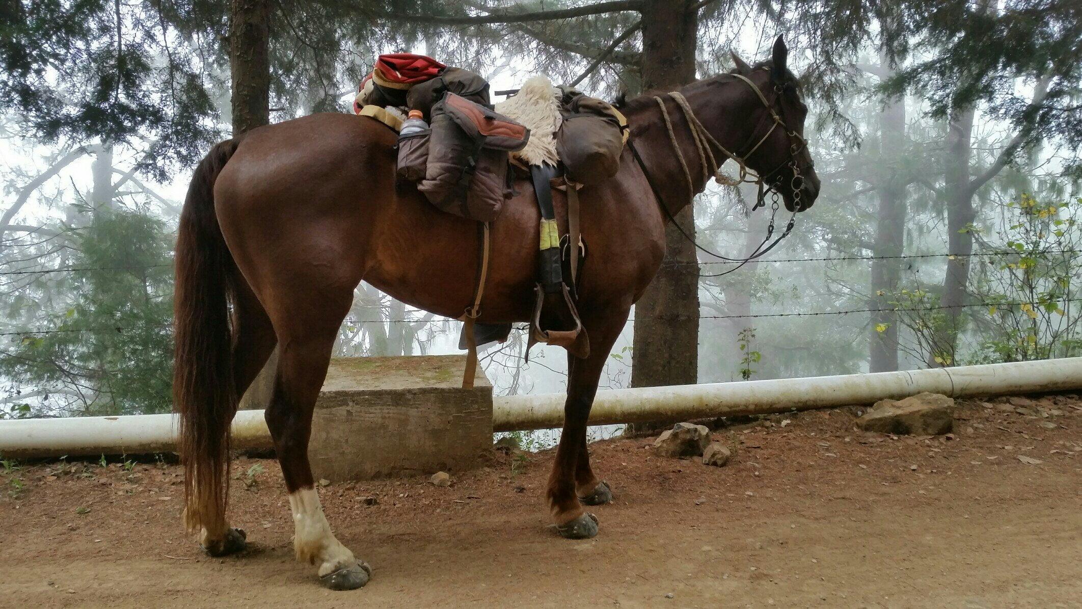 Orthoflex saddle panel modifications | 5000 Miles of Hope