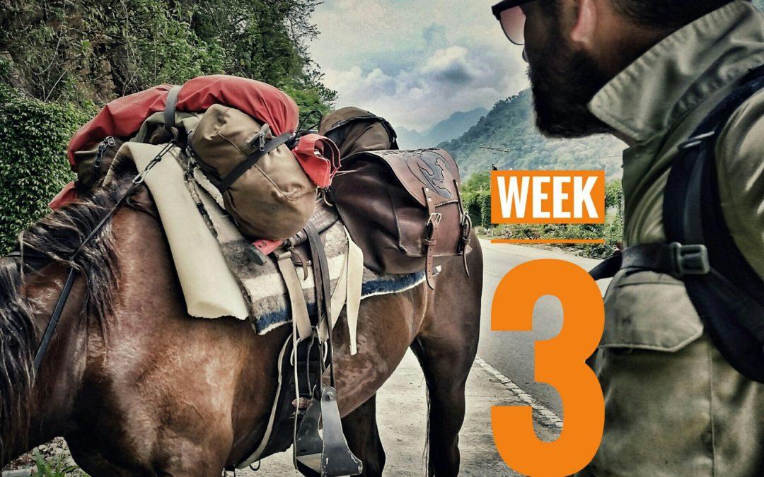 WEEK 3 | 5001: México a Caballo