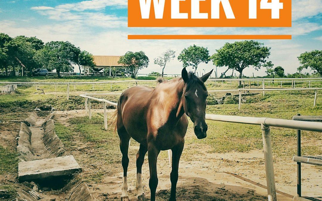 WEEK 14 | Mexico a Caballo