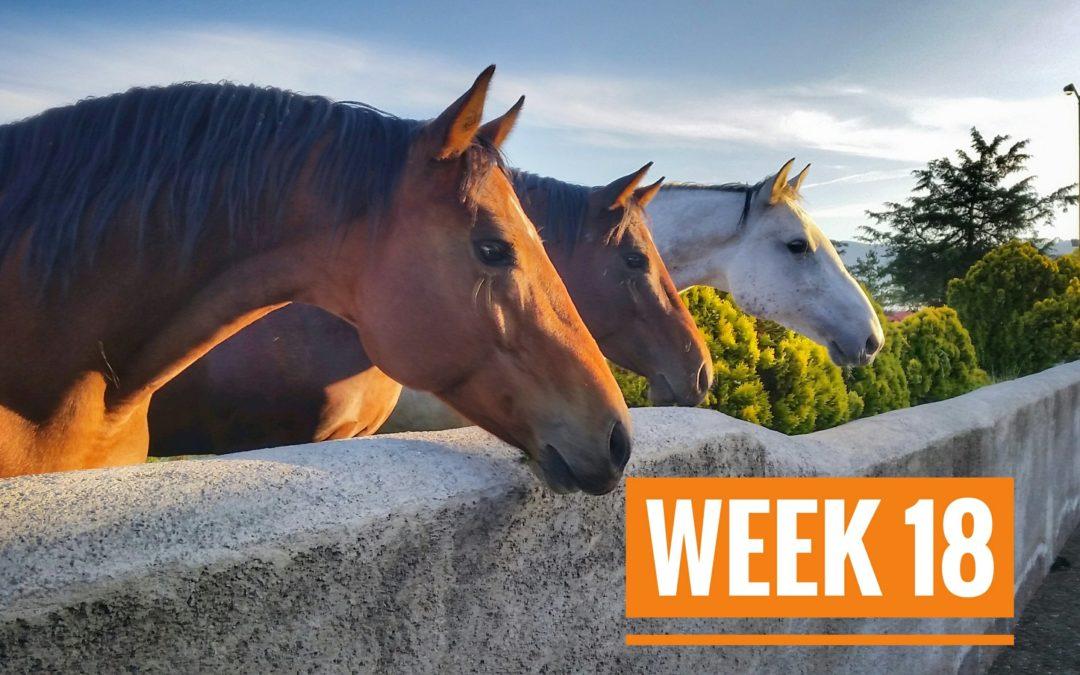 WEEK 18 | Mexico a Caballo